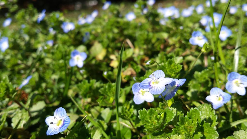 spring1 by solstiziodinverno