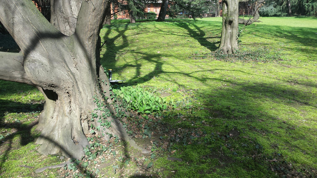 shadows5 by solstiziodinverno