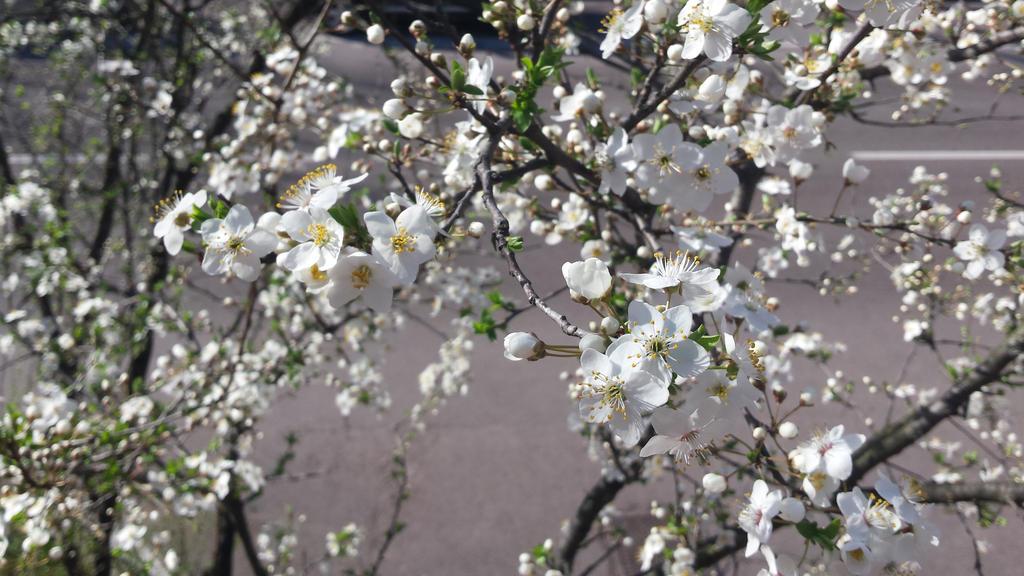 white by solstiziodinverno