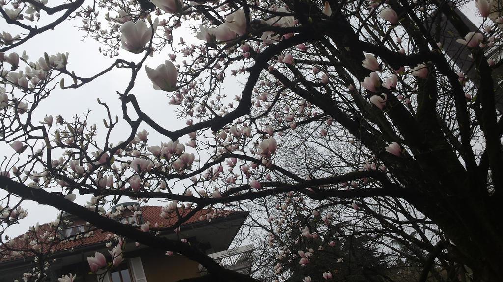 magnolia5 by solstiziodinverno