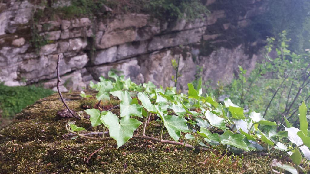 ivy2 by solstiziodinverno