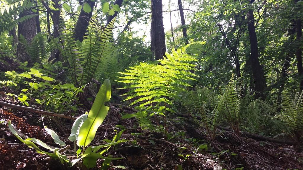undergrowth by solstiziodinverno