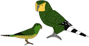 Parrots by Nighttime