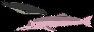 Freshwater Sea Mammals