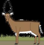 A Mammal with Four Eyes? by WildandNatureFan