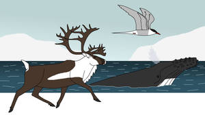 Polar Marathon Runners