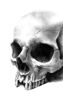 skull render