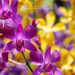 life is beautiful by warnaiman