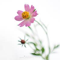 life is beautiful iii by warnaiman