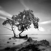 Memories of a Lifetime iv by warnaiman
