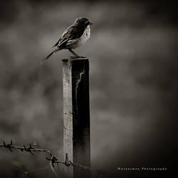 alone by warnaiman