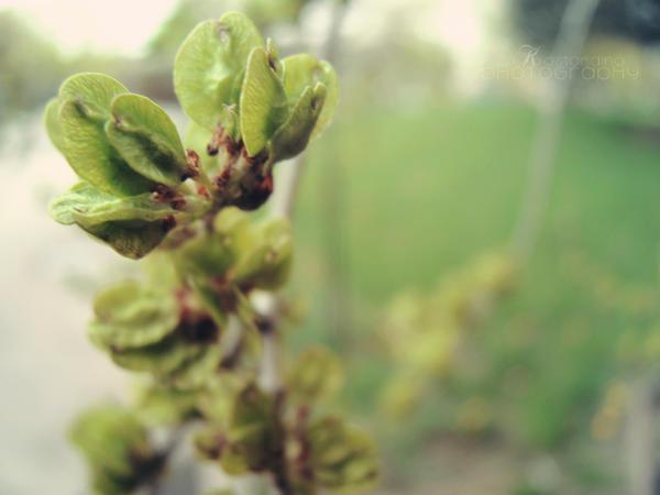 budding hope by Kostandina