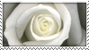 White Rose STAMP by stamps-for-everyone