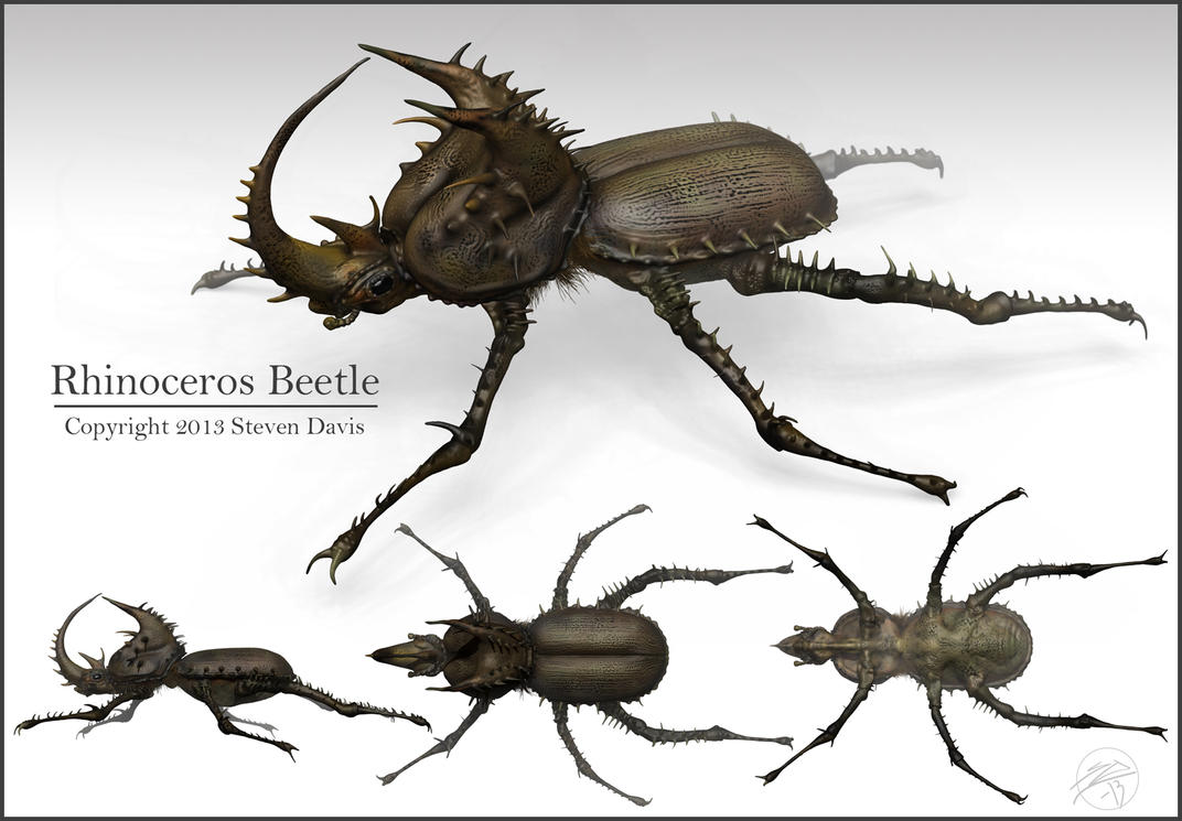Rhino Beetle by sdavis75 on DeviantArt
