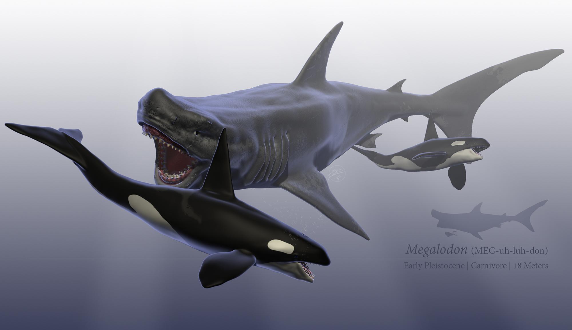 Megalodon by sdavis75