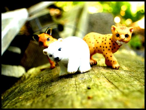 Animals by Marekatt