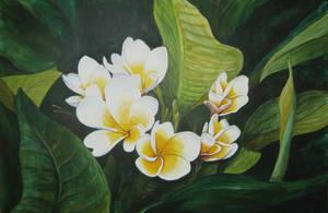 White Plumeria by MarkHarman