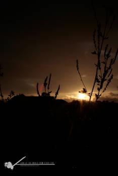 sunset -ninth time-