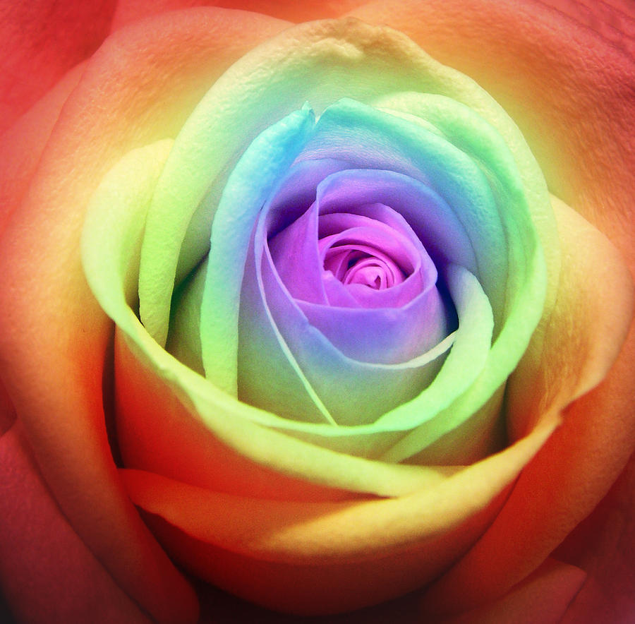 Tiedye rose by x xangelofmusicx x on deviantart for How to make tie dye roses