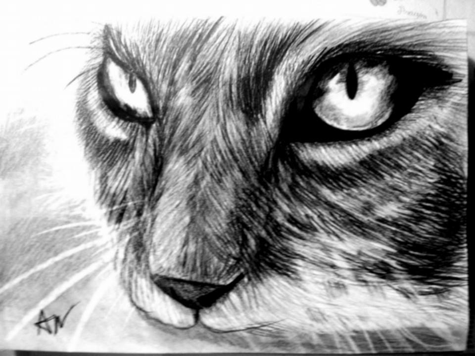 Cat pencil drawing by patrissaart