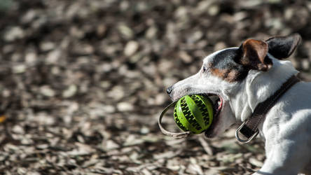 diXie and the ball