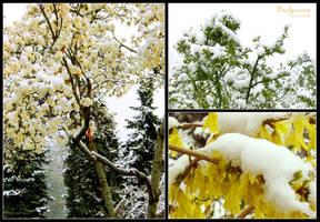 Spring snow by Dobina