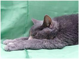 Cat - 7 by Dobina