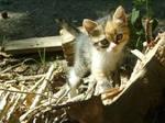 Kitten-1