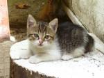 Kitten-2