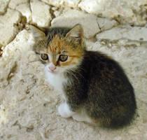 Kitten-8 by Dobina