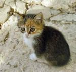 Kitten-8