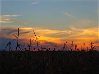 Sunset by Dobina