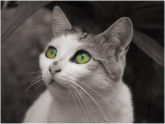 Cat-18 by Dobina