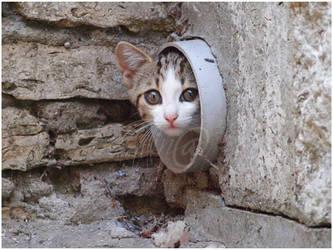 Kitten-10 by Dobina