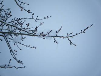 Snow Photos 1