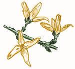 [D33] Forsythia Flowers