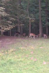 Tierpark 4