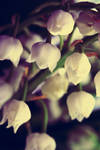 White Bells by Substitut