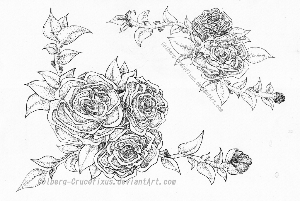 Roses by Colberg-Crucefixus