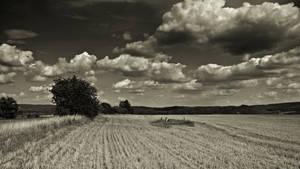 Summer field 3