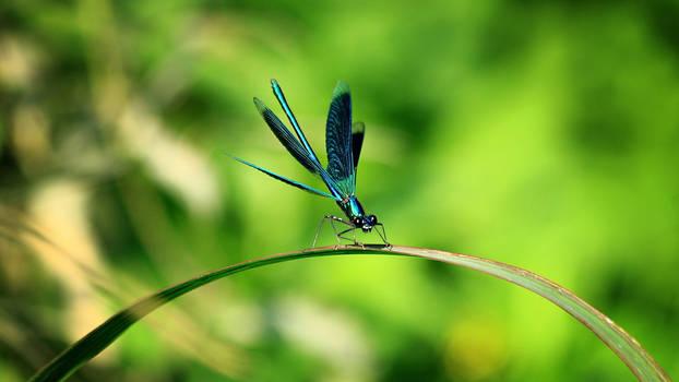 Dragonfly 3