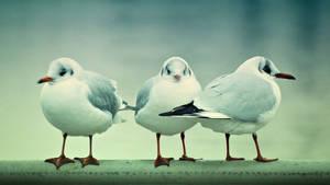 3 friends by Csipesz