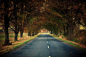Autumn Road by Csipesz