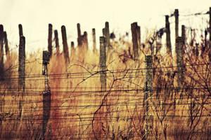 Winter vineyard by Csipesz