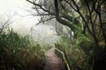 Foggy morning 4 by Csipesz