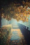 Foggy morning 8 by Csipesz