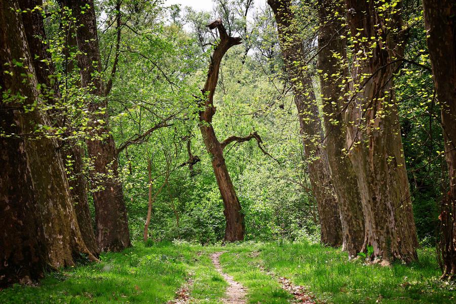 Spring walk 10 by Csipesz
