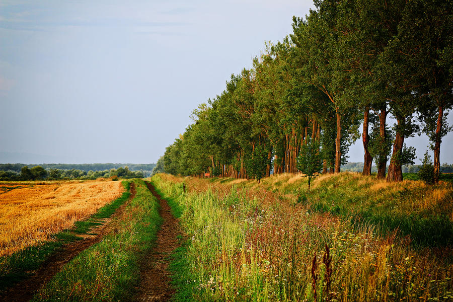 Homeland by Csipesz