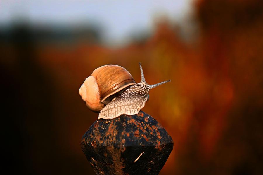 Snail 9 by Csipesz