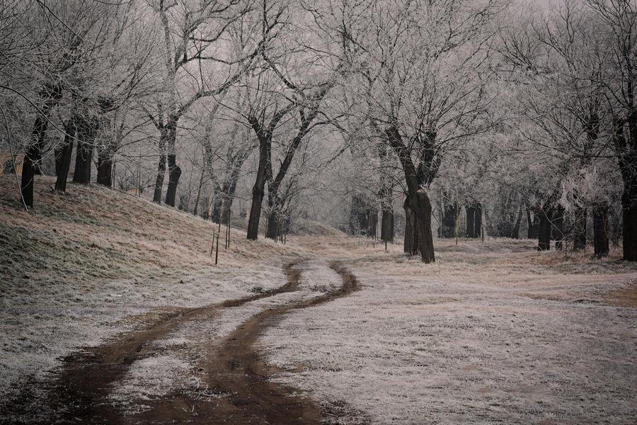 Frozen 11 by Csipesz